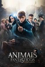 Animais Fantásticos e Onde Habitam (2016) Torrent Dublado e Legendado