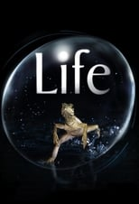 Poster Image for TV Show - Life
