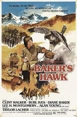 Bakers Habicht