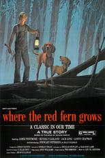Wo der rote Farn wächst