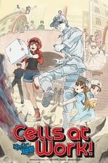 Poster anime Hataraku SaibouSub Indo
