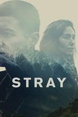 Stray (2018) Torrent Legendado