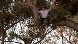 Família Moderna: 4 Temporada, Quando uma Árvore Cai