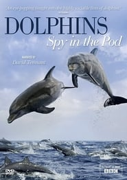 Dolphins - Spy in the Pod FULL MOVIE