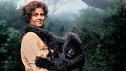 Gorilles dans la Brume wallpaper