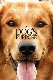 Poster Movie A Dog's Purpose 2017