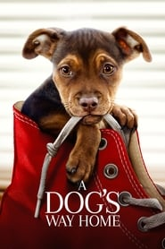 View A Dog's Way Home (2019) Movie poster on cokeandpopcorn.click