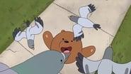 Grizz e i piccioni