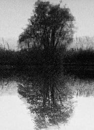 Tree Reflection (1998)
