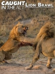 Caught in the Act: Lion Brawl
