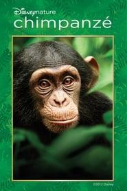 Chimpanzé Torrent (2012)