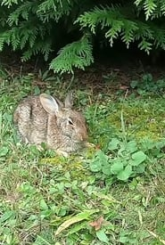 Comforting A Dying Rabbit