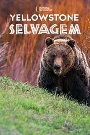 Yellowstone Selvagem