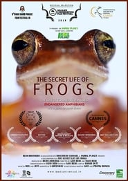 مشاهدة فيلم The Secret Life of Frogs مترجم