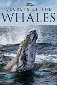 مسلسل Secrets of the Whales