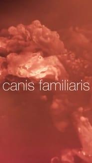 Canis familiaris 1970