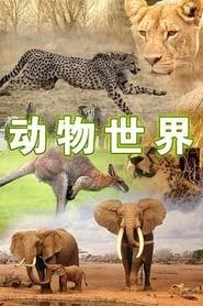 动物世界 1981