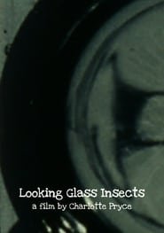 Looking Glass Insects 2013
