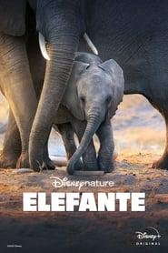 Elefante – Legendado