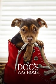 A Dogs Way Home Full Movie Download Free HD 720p