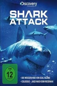 Shark Attack 2013