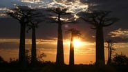 Madagascar: Legends of Lemur Island