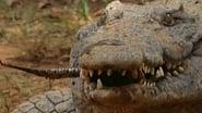 Secrets of the Crocodile Caves