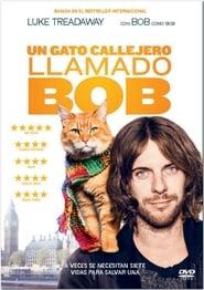 Ver Un gato callejero llamado Bob
