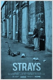 Strays (17                     ) Online Cały Film Lektor PL