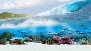 Tahiti 3D - Destination Surf images