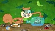 SpongeBob SquarePants saison 11 episode 41