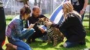 Leones, tigres y mensajes
