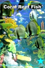 Regarder Beautiful Coral Reef Fish