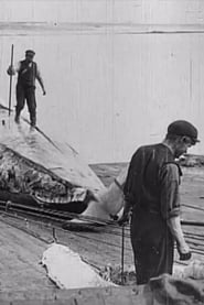 Whaling Afloat and Ashore 1908