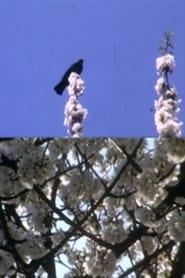 Mourning Garden Blackbird