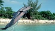 Flipper en streaming