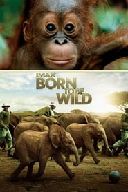 Poster Born to Be Wild 2011