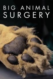 Big Animal Surgery 2019
