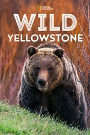Wild Yellowstone - Season 1