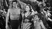 Le triomphe de Tarzan images