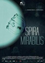 Miraculous Spiral