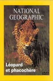 National Geographic Leopard et phacochere