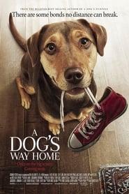 O psie, który wrócił do domu