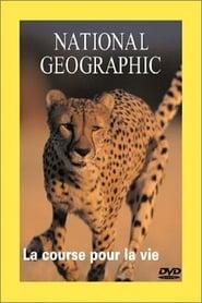 Cheetahs: The Deadly Race