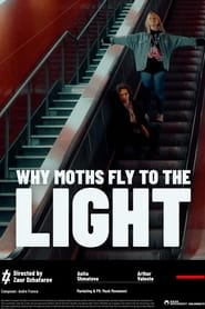 Why Moths Fly to the Light?