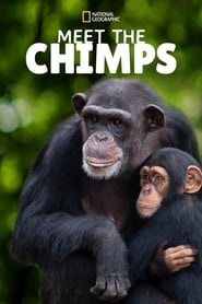 Meet the Chimps Season 1