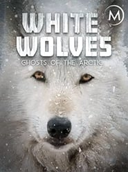 مشاهدة فيلم White Wolves: Ghosts of the Arctic مترجم