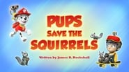 Pups Save the Squirrels