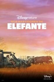 Nos Bastidores de Elefante