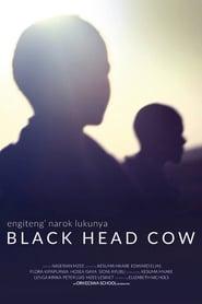 Black Head Cow